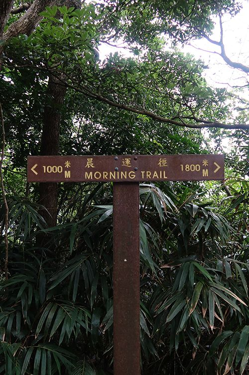 Lugard Road morning trail